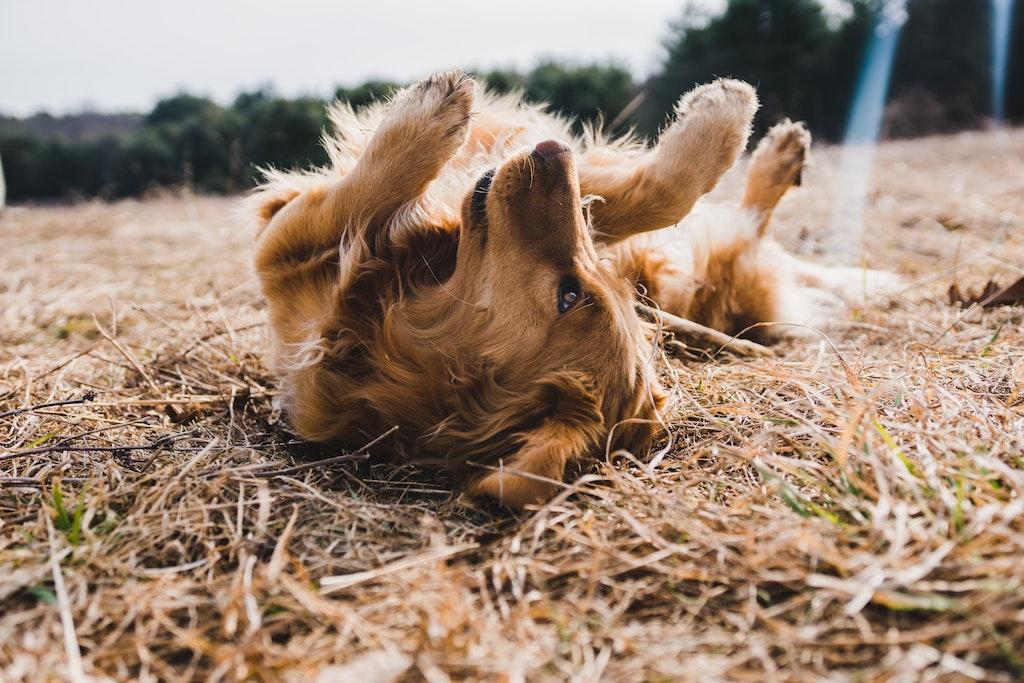 Cosa fare quando muore un animale cane