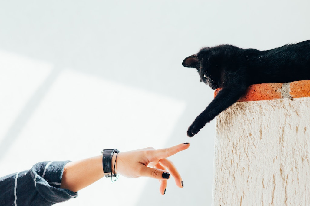 cosa fare quando muore un animale gatto nero